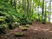 ◆森林ウォーク