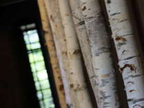 【白樺の木】ロビーよりレストラン、お部屋にぬける通路に本物の白樺の木を飾ってあります