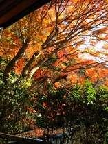 客室『萩』からの眺め。(2007年12月6日)