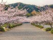 【桜☆お花見】南房総随一の桜の名所「安房神社」の和菓子セット付き☆スタンダード「ニース」