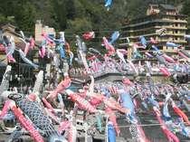 鯉のぼり祭りは4月1日~5月6日。3500匹が杖立川の上を泳ぎます。