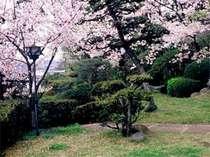 咲き乱れる桜を眺めながらお食事♪お花見プラン