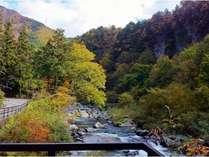 当館前の渓流の風景。静かな自然の中で、秋は色とりどりの木々と川の流れをお楽しみください