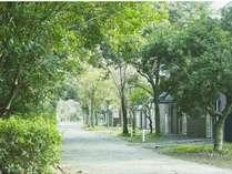 季節の移り変わりを感じる木々に包まれた道