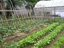 敷地内にある自家菜園。旬の新鮮な野菜は栄養満点!