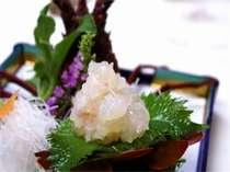 プリップリッの新鮮な伊勢海老のお造り☆一口食べると旨みと甘みが口中に広がる!