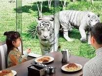 伊豆アニマルキングダムのレストランでは、食事をしながら間近にホワイトタイガーが。