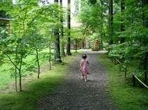 緑に囲まれた敷地内に子供も大満足!