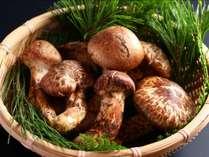 ■10月末までの期間限定松茸プラン 地元産松茸の芳醇な香りをお愉しみ下さい♪