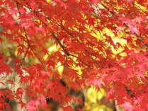 筑波山紅葉見ごろ 例年:11月上旬~11月中旬