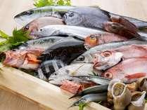 富山の魚が皆様をお出迎え致します♪
