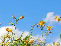 グリーンシーズンの裏磐梯でトレッキング◎五色沼、磐梯山や雄国沼のニッコウキスゲ探索も♪【素泊まり】