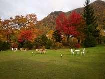 紅葉に彩られる秋の定山渓をお楽しみください。