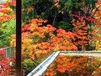 紅葉の季節はラウンジから鮮やかなパノラマが眺められます(写真は2017/10/8撮影)。