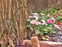 階段とインパチェンス、季節の花。