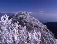 雲仙の冬場の代名詞「霧氷」。写真の仁田峠まで当館より車で20分