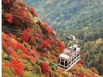 紅葉依スポットの仁田峠までは車で20分。毎年10月下旬~11月中旬に見ごろを迎える