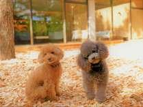 【ドッグラン】四季折々の景色を楽しみながら、愛犬と穏やかな時間をお過ごしください
