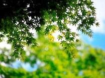 夏の青空に映える緑