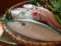 朝獲れたての富山湾の鮮魚(イメージ)