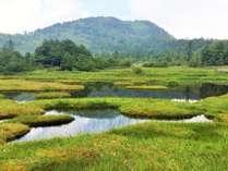 **志賀高原/可憐な高山植物にレベルに応じて楽しめる様々なトレッキングコース