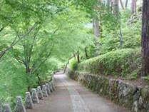 緑のトンネル高城山展望台