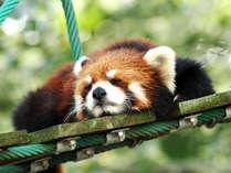 【旭山動物園】自然に近い環境作りで動物たちの活発な動きが見れる行動展示が魅力