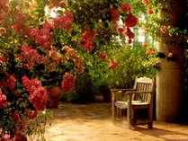 【パティオ】初夏に咲くつる薔薇はパティオの象徴。
