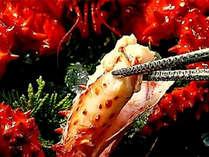 花咲ガニ:カニ専門の目利きが選んだ「浜ゆでの花咲ガニ」自然の旨味が凝縮された御馳走です。