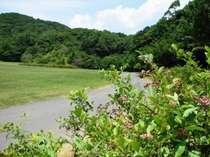 敷地内のブルーベリー畑横の散歩道