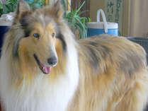 *【看板犬】愛犬のサチです!当館は大切なペットと一緒にお泊りいただけるお部屋もございます♪