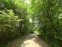 この緑を抜けると、コテージとペンションが見えてきます。お散歩コースにはうってつけ!