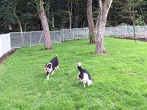 夏のドッグラン。周りの緑濃く、芝生も青々としてペットも大喜びです!