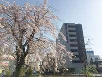 桜とホテル外観