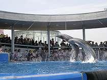 【素泊まり】大分マリーンパレス水族館【うみたまご】チケット2枚付♪