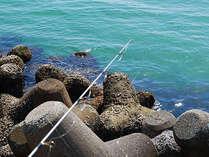 こんなの釣れちゃった★子どもの笑顔と伊良湖の魚で思い出づくり■海釣りセット付プラン◇3月~7月