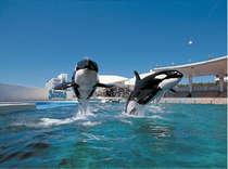 シャチやイルカなど、海の仲間たちの華麗なショーが楽しめる