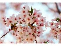 【お花見プラン】1月・2月☆お得にと日本1早い桜をみて 満喫沖縄ステイ♪