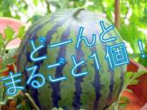 【じゃらん限定】お子様歓迎3大特典♪<名産「神鍋スイカ」・「花火セット」・「お菓子つかみ取り」>