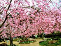 ≪京都・奈良・伊賀の「桜」を見る≫隠れ宿プラン★夕食は「天然いのししぼたん鍋」