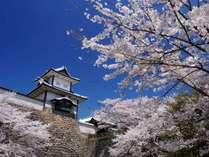 春の金沢城公園(当館から徒歩約20分)