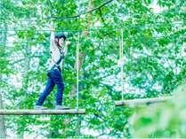アクティビティ「森の空中散歩」