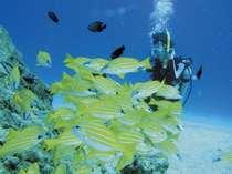 【体験ダイビング(通年)】色とりどりの熱帯魚があなたの目の前5cmまでやってきます。