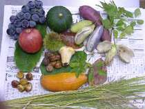 近くの農家や山で採れた秋の味覚。これらの食材を活かして主人自らが料理。