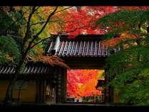 【早割50】紅葉シーズン限定!早めのご予約がとってもお得♪「近江牛ディナービュッフェ」【西館限定】