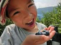 【特典付☆】夏休みを楽しもう♪無農薬、無化学肥料で育ったフレッシュなブルーベリー狩り割引付プラン♪♪