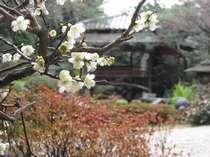 館内庭園の梅