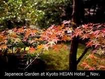 【秋】中庭の景色