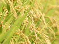*美味しい新潟のお米を、ぜひご自宅までお持ち帰りください。
