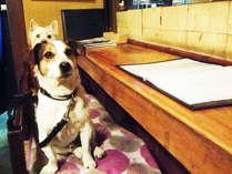 ☆当館看板犬☆ペット連れのお客様大歓迎!お友達を待ってるワン♪